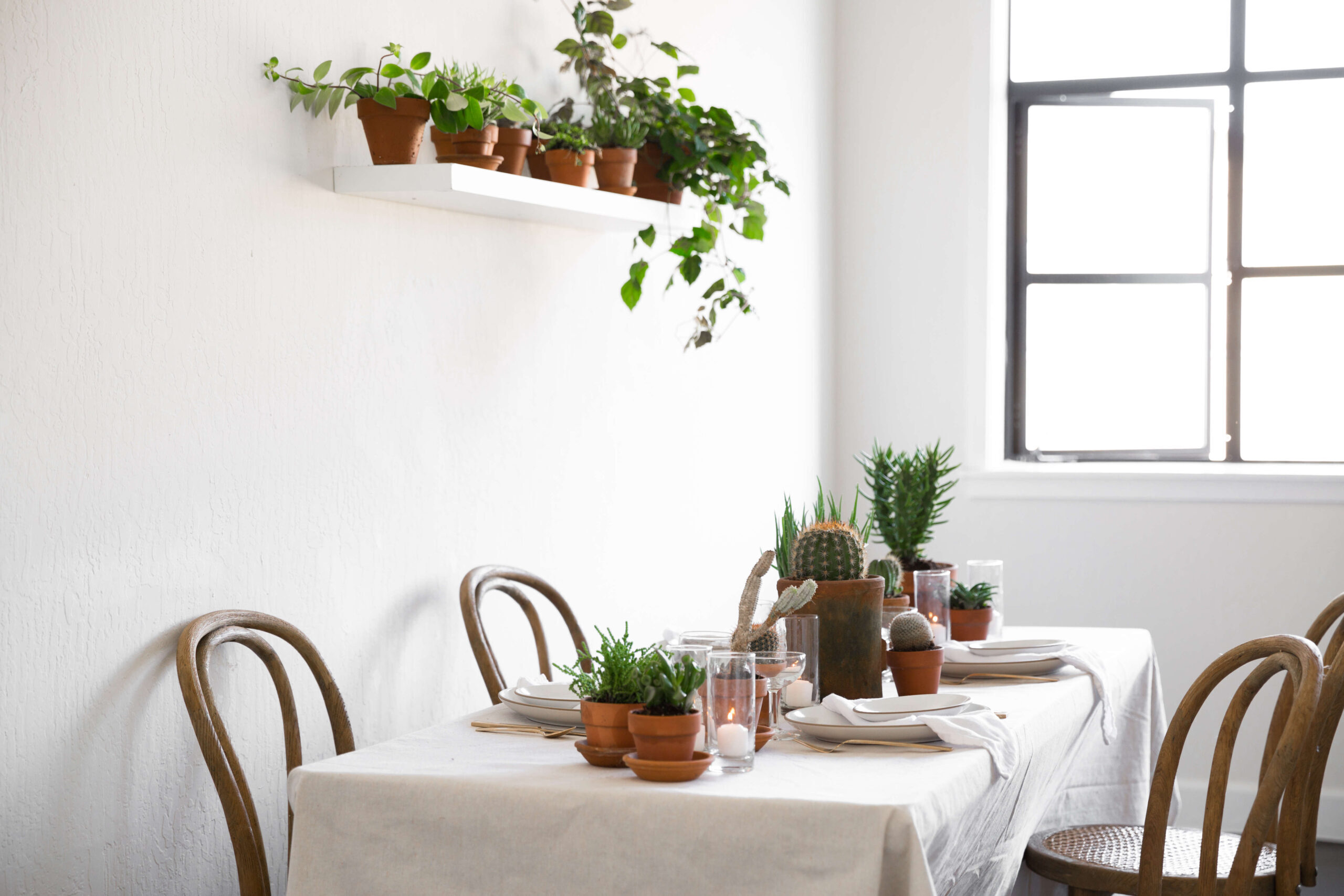 plantlibrary-80-houseplants-terra-cotta-dining-room-gardenista-2741433-scaled-3521029